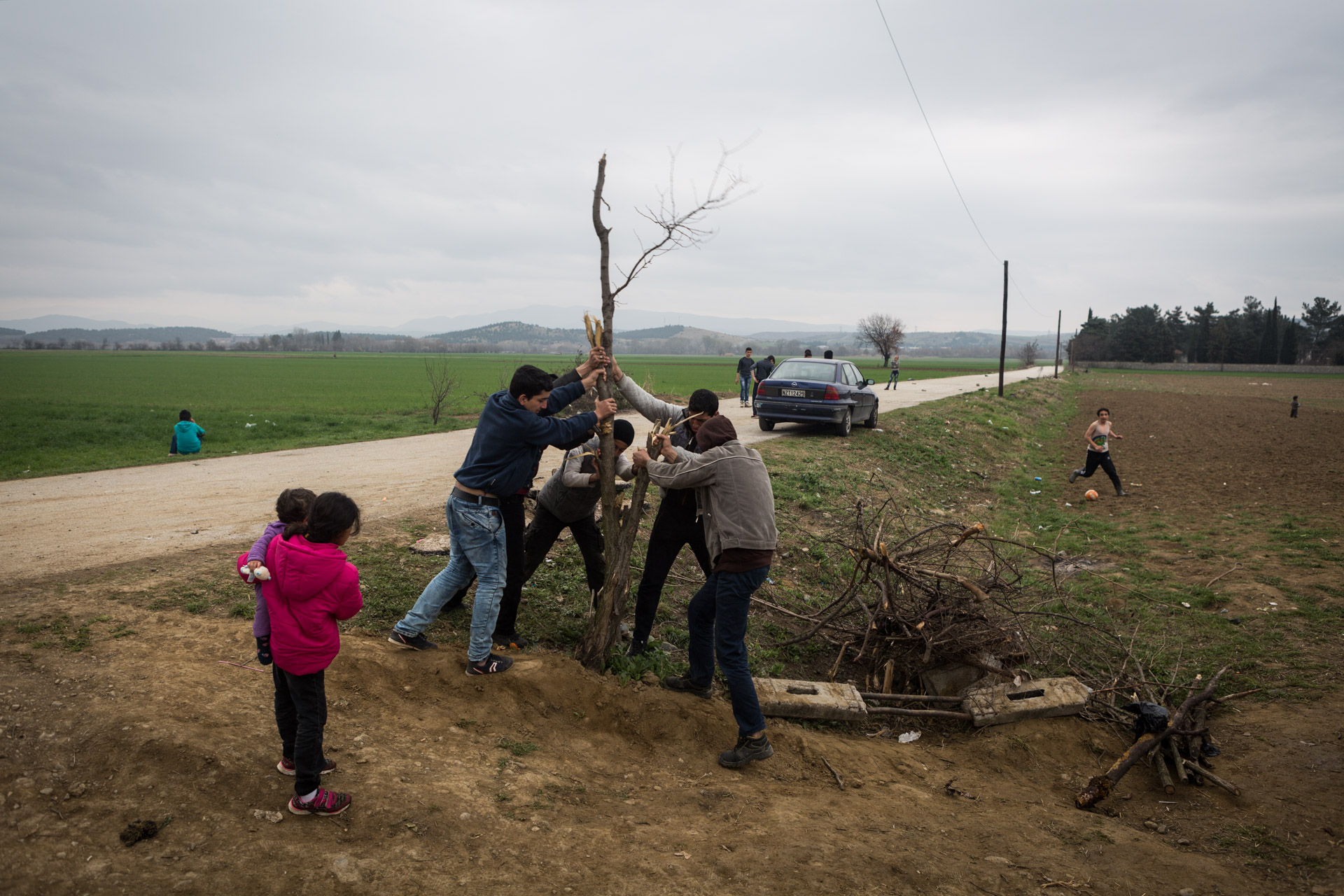 Unable to find enough fire wood to burn in the evening, Basem, Abd al-Rahman, Mohammad and Ahmad start to uproot a small tree nearby.